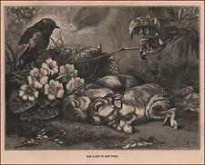 BABY RABBITS Asleep in the Woods, antique engraving, original 1886