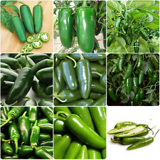 100pcs Spicy Jalapeno Chile Pepper Seed Capsicum Vegetable Seeds Garden Plant