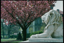 470004 Spring Blossoms At Stone Lions At Lausanne Switzerland A4 Photo Print