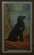 VINTAGE~GALLAHER~CIGARETTE~CARDS~DOGS~FLAT~COATED~RETRIEVER~NUMBER~No~#~2~X1~b18