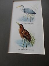 vintage print of Heron  and Bittern  ideal to frame