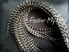"Whiting  Super Euro Extra Long Length Feather Hair Extension 12"" Or Longer DIY"