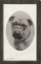 "PORTRAIT OF A HANDSOME BULL DOG NAMED ""THE ADMIRAL"" (1910 REAL PHOTO POSTCARD)"