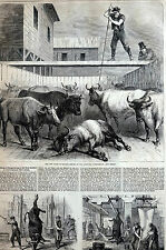 Communipaw NJ 1867 New Slaughterhouse ANIMAL CRUELTY Matted Print Full Story