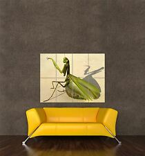 POSTER PRINT GIANT PHOTO NATURE ANIMAL INSECT PRAYING MANTIS WEIRD LIFE PAMP314