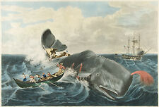 Images of Americana: Whaling Art: Capturing a Sperm Whale  - Fine Art Print