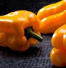 10 Seeds Peppers Ario,#304