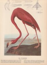 "1942 Vintage AUDUBON BIRDS #431 ""FLAMINGO"" PINK WOW! Color Art Plate Lithograph"