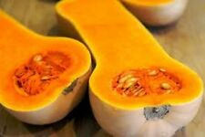 BUTTERNUT SQUASH ,Terrific baked, steamed or stuffed, No GMO (50 Organic seeds)