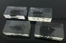 4PCS Real Scorpion Beetle Insect Specimens In Lucite Paperweight/Collection