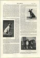 1897 chien avec un oeil de verre cap chasse chiot miss mabel hemming