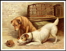 JACK RUSSELL AND IRISH TERRIER EXAMINE CRAB LOVELY IMAGE DOG PRINT POSTER