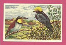 Birds Bee Eater Yellow Skull Animals of Africa Congo Van Tieghem Dupont Card #52