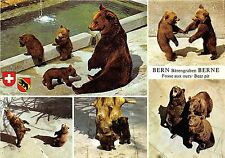 BF39410   bern switzerland  bear ours   animal animaux