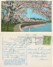 USA - japanese Cherry Blossoms - Riverside Drive  - Washington D.C. (E-L 061)