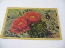 Vintage Postcard: Prickly Pear Cactus in Bloom D-40 1949