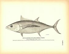 Rare 1884 Antique Fish Print ~ The Albacore