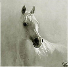 CHENPAT37 large 100% hand-painted white horse oil painting art on canvas