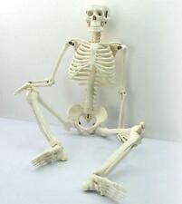 NEw 45cm Human Anatomical Anatomy Skeleton Medical Model +Stand Fexible New