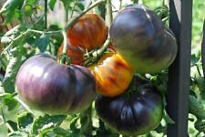 5 Graines/Seeds de Tomate Ancienne - Variété : ANANAS BLEUE - Très Rare ! - BIO