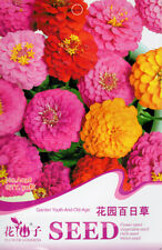 1 Pack 50 Colorful Zinnia Seeds youth-and-old-age Zinnia elegans A038