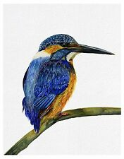 A4 Kingfisher Bird Watercolour Painting Signed Limited Ed Print Easter Gift