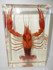 Large Red Lobster (Freshwater Crayfish) Specimen Clear Lucite Paperweight
