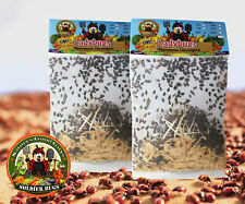 """2 Bags of 1500 """"Fresh"""" Ladybugs - Guaranteed Live Delivery! Buy from the SOURCE"""
