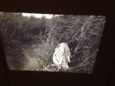"Edward Curtis ""Cutting Rushes"" Mandan Native American photography 35mm Art slide"