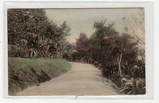 ROAD AT HAMILTON'S HOTEL: Bermuda postcard (C2198).