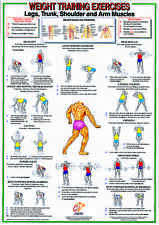 Weight Training & Bodybuilding A2 Exercise Laminated Chart - Whole Body Workout