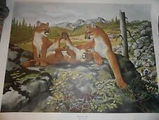 RAY HARM MOUNTAIN LION (ON ROCK)$150-BUY 3 PRTS AT LEAST 1 $65 GET 1 FREE PRINT