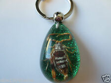 Scorpion Insect Key Chain / Glitter Background / Jumbo Real Scorpion