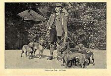 Aufbruch zur Jagd Die Meute Jagdhunde Hundeführer Histor. Bilddokument von 1899