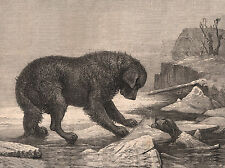 NEWFOUNDLAND DOG SAVING PUPPY FROM THE ICE ON GREETINGS NOTE CARD