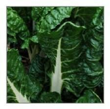 Organic Heirloom Fordhook Giant Swiss 50+ Seeds Chard Seeds Extremely large