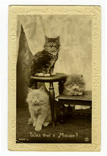 1920s Brtish CUTE CATS Was that a Mouse ? photo postcard
