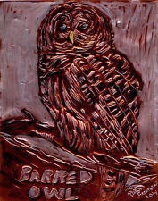 """BARRED OWL"" by Ruth Freeman ETCHED COPPER FOIL 8"" X 10"""