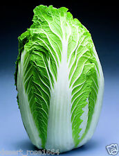 50 PCS MICHIHILI CABBAGE Chinese Seeds Vegetable seeds for kitchen Garden
