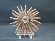 "Large Beautiful Real Multileg ""Sunflower"" Starfish 6""- 8"" size Sea Star Craft"