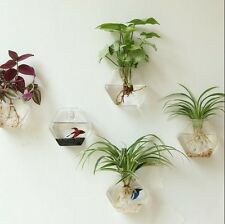 Pack of 2 Wall Hanging Glass Planters Air Plant Terrariums Flower Pots Vase