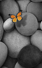 Framed Print - Black and White Asteroid Stones with Colour Butterfly (Picture)
