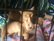 HELP FEED MOM CAT 3 KITTENS and FERAL CATS 100% of SALE BENEFITS RESCUES PHOTO