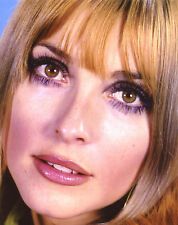 Sharon Tate 8x10 photo T1362