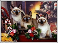 Pack of 4 Kitten Cat Christmas Cats Greetings Stationery Notecards /Envelopes 11