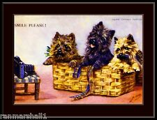 English Picture Scottish Cairn Terrier Dog Dogs Puppy Puppies Vintage Art Poster