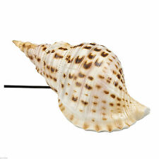 SEASIDE NAUTICAL SEA SHELL TABLE LED LAMP VINTAGE CONCH KITSCH NOVELTY GIFT HOME