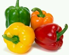 SWEETEST RED,YELLOW,GREEN,ORANGE BELL PEPPER SEEDS 20 SEEDS