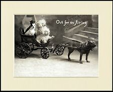 STAFFORDSHIRE BULL TERRIER PULLING DOG CART LOVELY PRINT MOUNTED READY TO FRAME
