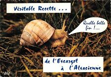 BR44121 snail escargot animal